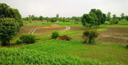 Punjab History